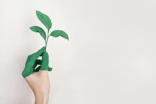 SDGsと木育の関係