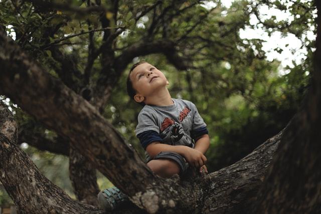 子供との遊び方 ひとりで木に登る少年